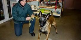 Bijtende honden: spuitje geven of heropvoeden?