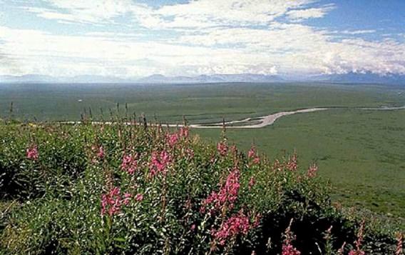 Congres geeft fiat voor olieboringen in natuurgebied Alaska