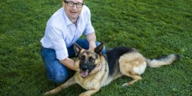 Hond, kat en koe, een politieke goudader