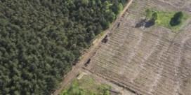 Bio-energie: zelden groen, vaak absurd