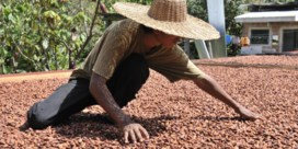 Discounters en fair trade, een verrassend huwelijk