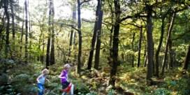 'Er verdwijnt meer bos dan dat er bij komt'