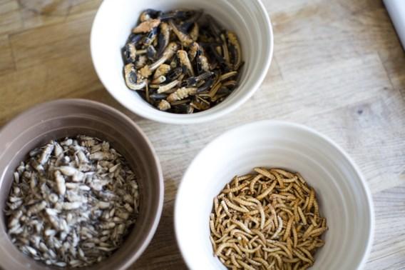 'Insecten kunnen vlees perfect vervangen'
