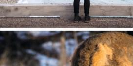 Alberta in het putje van de winter