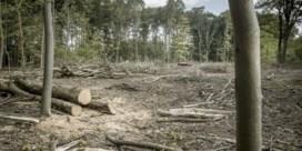 'Dubbele boekhouding' zaait twijfel over bossen