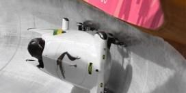 Cool runnings: Jamaicaanse bobsleesters hebben geen zorgen meer dankzij lokale bierbrouwer