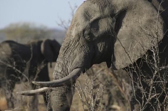 Afrika roept de EU op om de handel in ivoor te verbieden