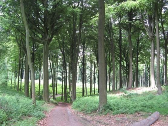 Groen belooft elke Vlaming bos op vijf kilometer van zijn deur