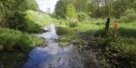 Vrouw (69) verdrinkt nadat ze zich met auto vastrijdt in moerasgebied