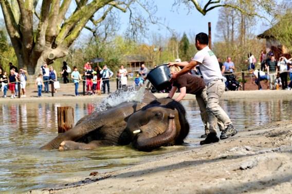 Pairi Daiza verkozen tot beste dierenpark van Europa
