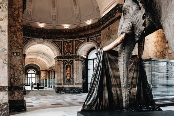 Vernieuwd Afrikamuseum opent nog dit jaar opnieuw de deuren