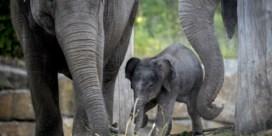 'Mensen rouwen langer om een olifant dan de dieren zelf'