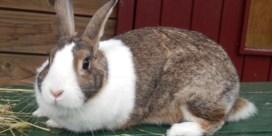 Word 'konijnenfluisteraar' met Vlaamse subsidies