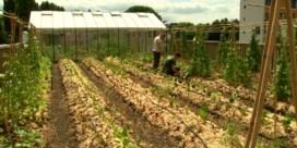 Delhaize in Brussel oogst groenten gekweekt op het dak