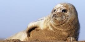Sea Life vangt eerste zeehondje van zomerseizoen op