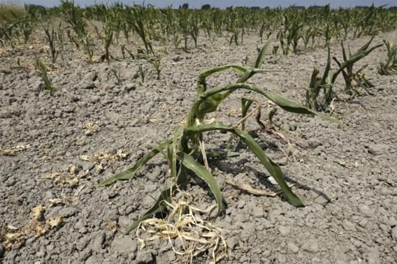 Boerenbond roept landbouwers op bewijzen te verzamelen van schade door droogte