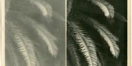 Zonnige groetjes van onder de palmboom