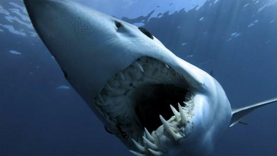 Haai doodt toerist in Rode Zee in Egypte