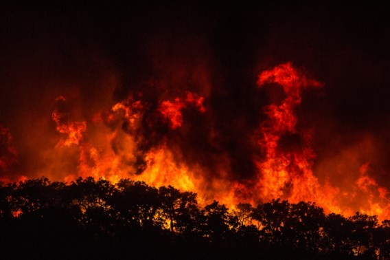 Eucalyptusbomen veroorzaken zware bosbranden in Portugal