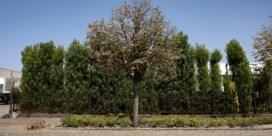 Tuinman draait zelf op voor verdroogde planten