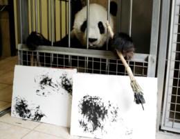 Deze zoo verkoopt schilderijen die gemaakt zijn door een panda