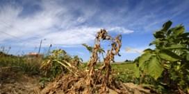 KMI bestempelt droogte als uitzonderlijk