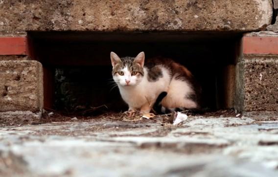 Regio in Nieuw-Zeeland wil katten bannen
