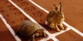 En de schildpad wint