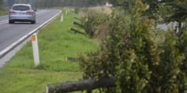 Vlaanderen rooit per vergissing 200 bomen langs afrit autosnelweg
