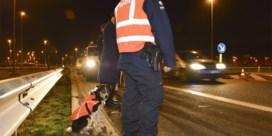 Bijna honderd migranten opgepakt tijdens grote actie in West-Vlaanderen