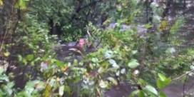 Zwangere vrouw klampt zich urenlang vast aan bomen om orkaan te overleven