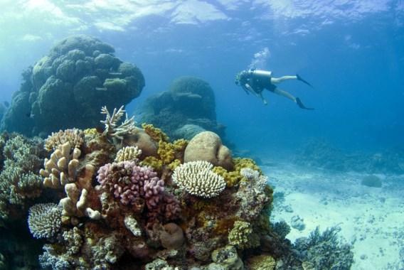 Toeriste in kritieke toestand na haaiaanval in Great Barrier Reef