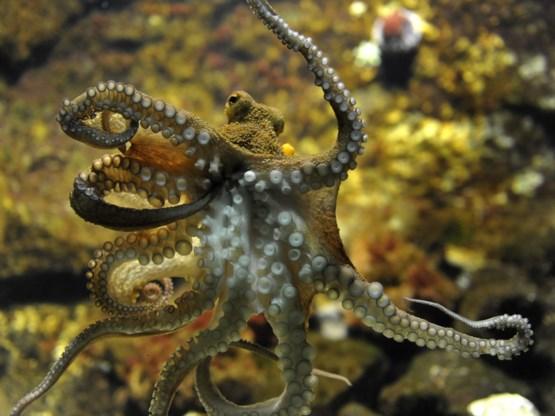 Ook octopussen zeggen ja tegen MDMA