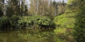 Stad koopt bos en vijver van private eigenaar voor 104.000 euro