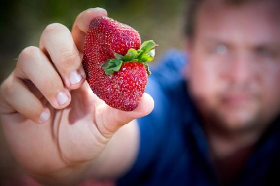 Australische supermarkt verkoopt geen naalden meer door aardbeiencrisis