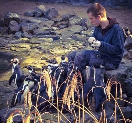 Pinguïnverzorger Dieter moet noodgedwongen bijzitten in Zaventems kiesbureau