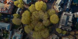 Waarom een groene bol slechter kan zijn dan een rode  (en omgekeerd)