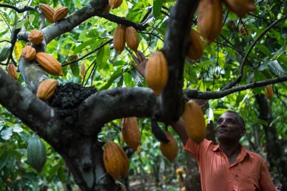 Fair trade groeit niet meer: is het concept op retour?