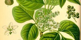 Studie naar homeopathie doet stof opwaaien