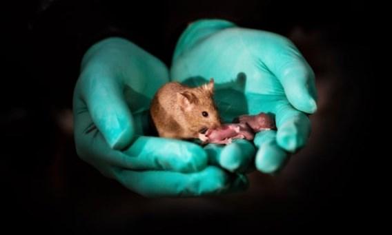 Deze muizen hebben twee moeders (en geen vader)