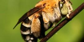 Bijen stoppen met vliegen tijdens zonsverduistering
