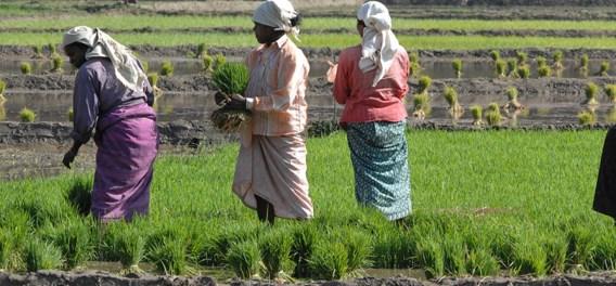 Wat is Fairtrade? De vijf pijlers van eerlijke handel