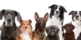 Hoe oud wordt uw hond?