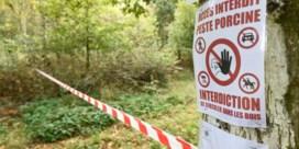 Vlaamse jagersbeweging pleit ervoor om jagen op everzwijnen niet langer te beperken