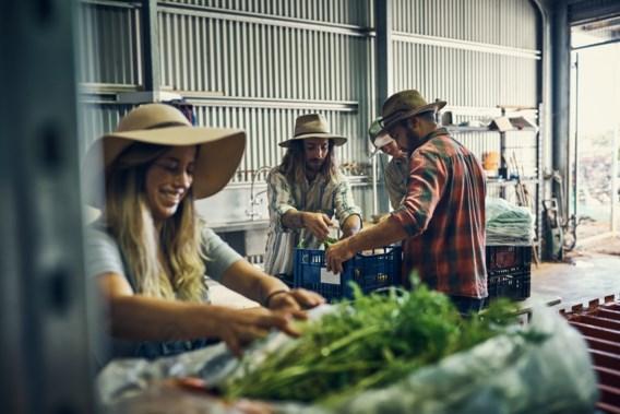 Australië versoepelt visa voor jongeren die in landbouw willen werken