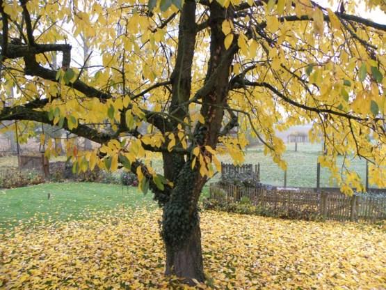 Tuin vol dorre bladeren? Laat maar liggen!