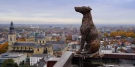 Er zit een hond op de Gentse Boekentoren