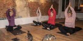 Met de kat op de yogamat