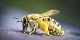 150.000 gestolen bijen teruggevonden