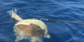 Vissers redden schildpad die vastzit in plastic mand
